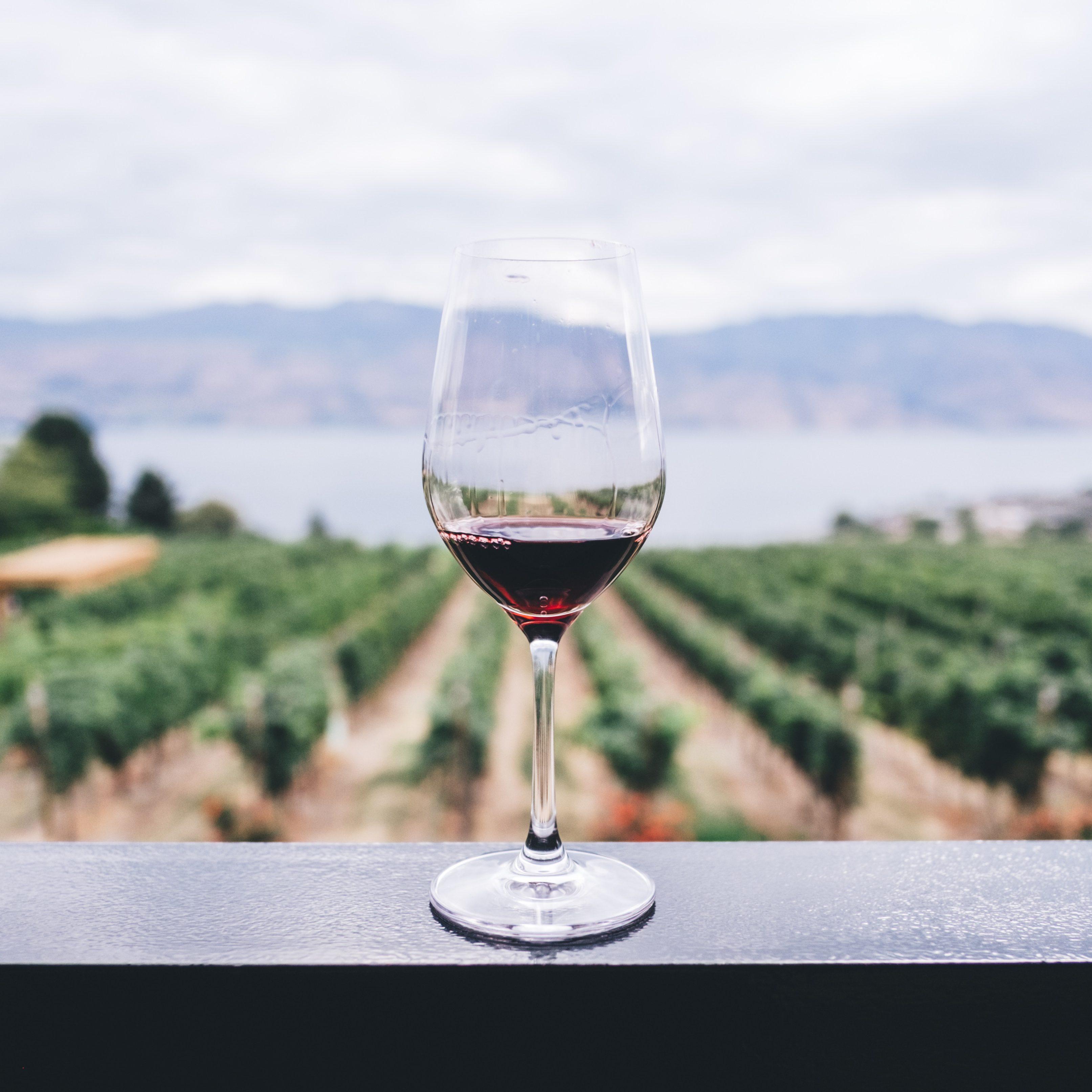 Weinglas, Rotwein vor Weinbergen in Südafrika