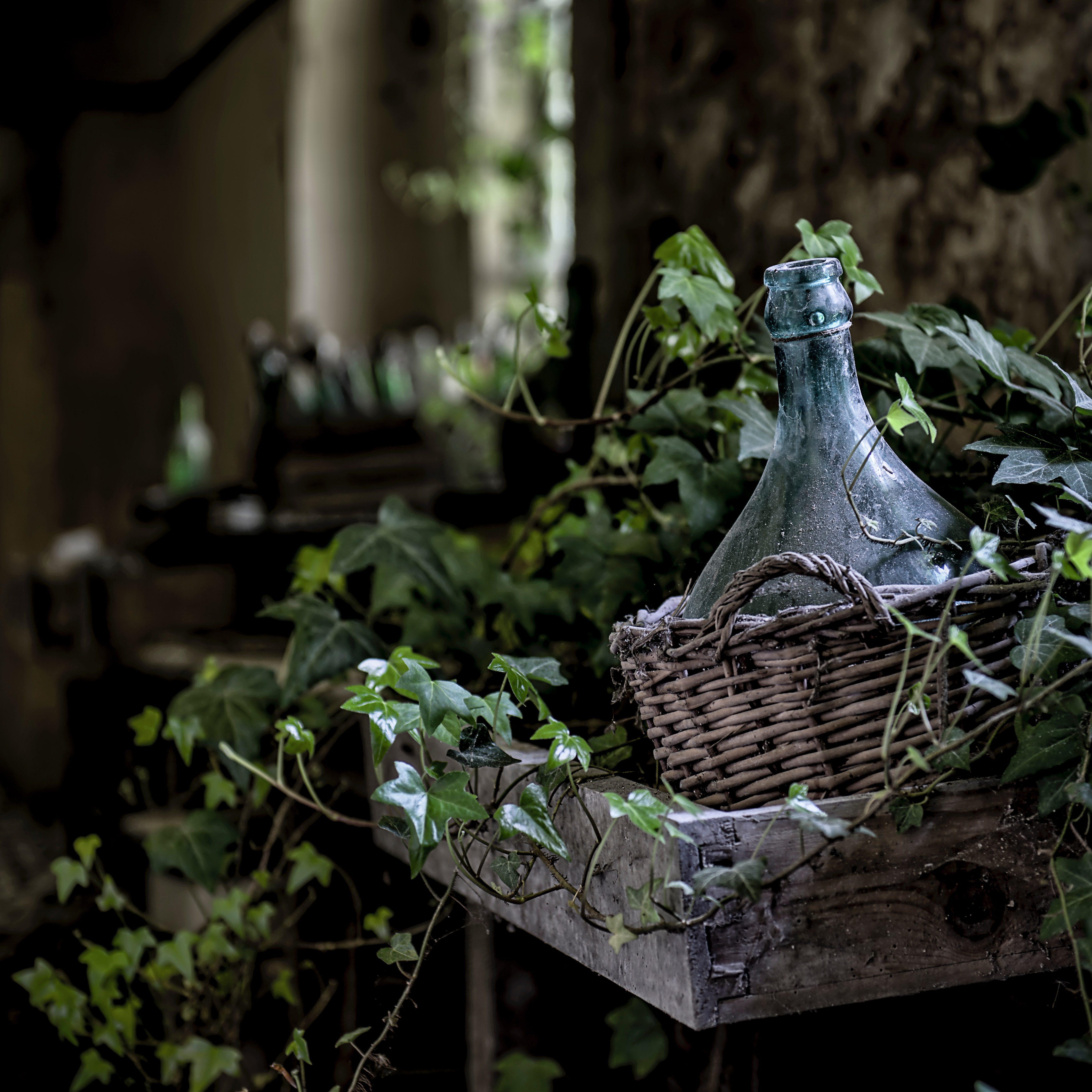 Weinflasche in Korb mit Blättern verziert in Italien